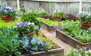 aménager le jardin potager