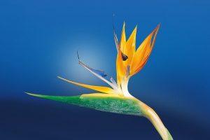 Cette plante va vous émerveiller avec sa splendeur