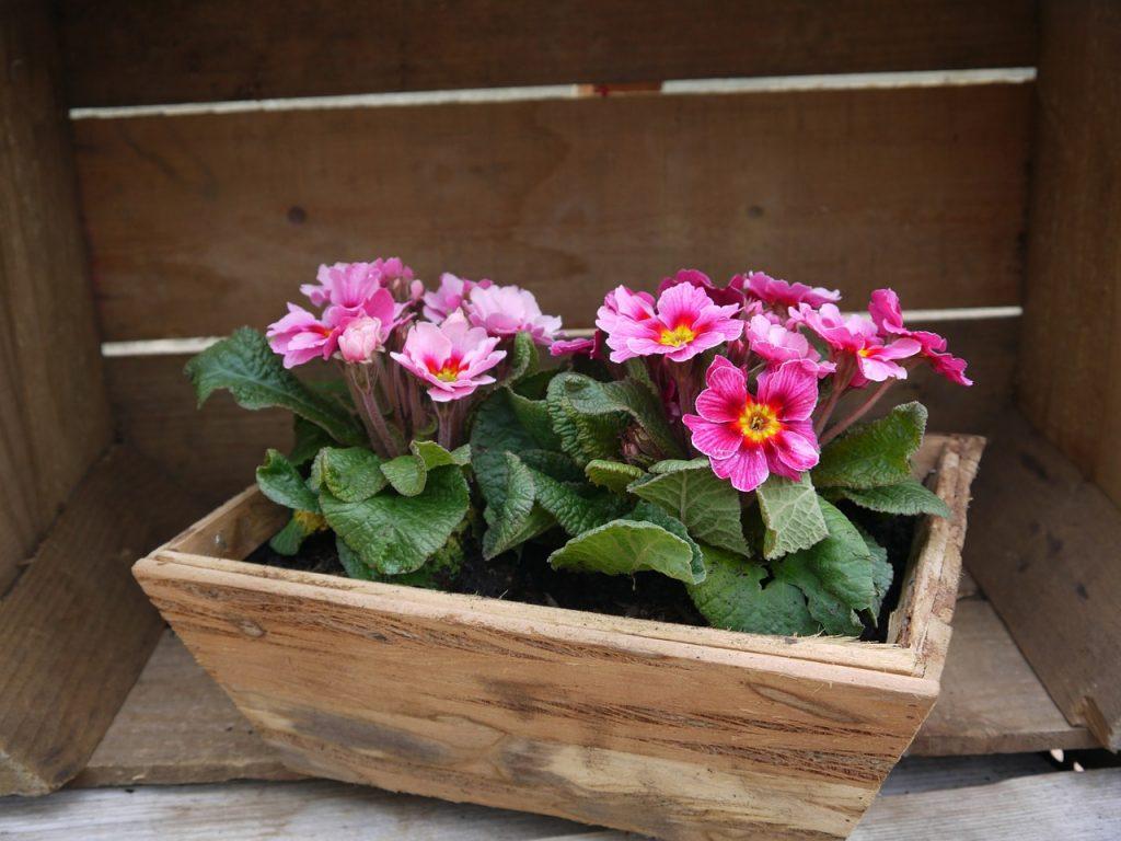 entretenir un bac à fleurs en bois