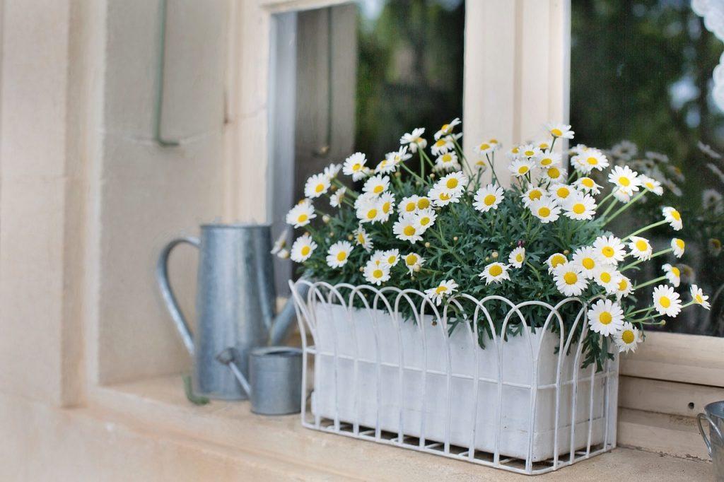 planter dans un bac à fleurs en bois